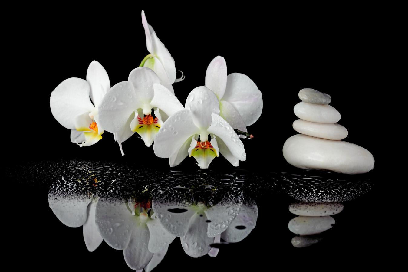 Zdjęcie kwiat, kamienie