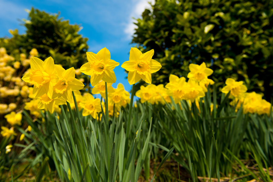 Zdjęcie kwiaty