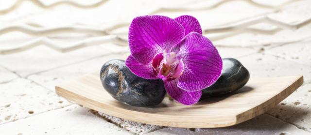 Zdjęcie kamienie kwiat