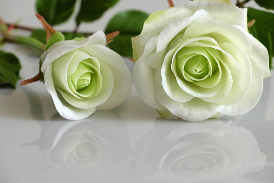Zdjęcie róże