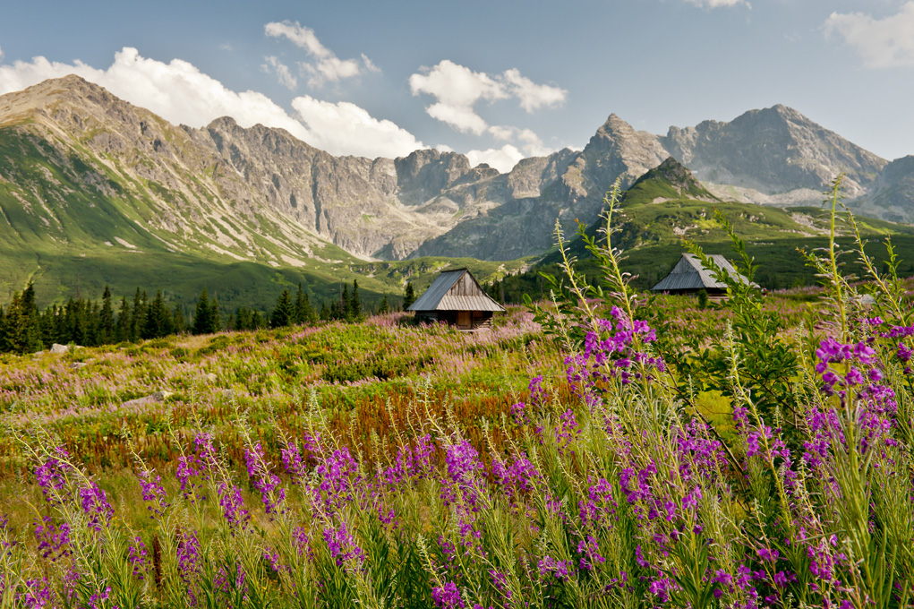 Zdjęcie góry