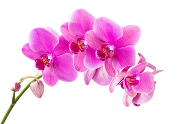 Zdjęcie kwiat