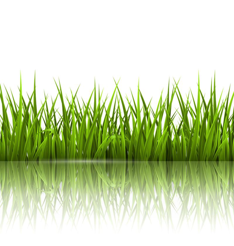 Zdjęcie trawa