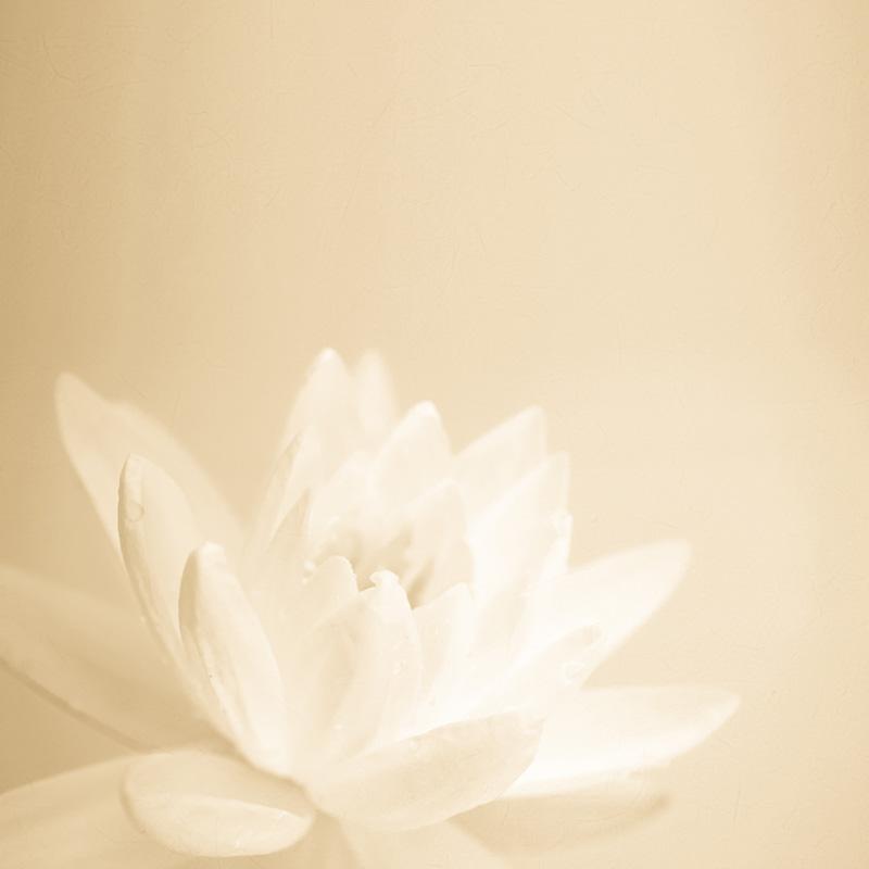 Zdjęcie lilia