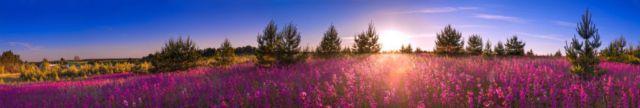 Zdjęcie kwiaty łąka